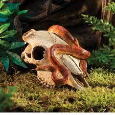 exo terra buffalo skull medium realistic terrarium aquarium
