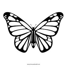 best butterfly outline 1192 clipartion com