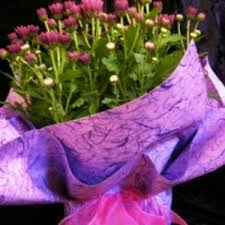 Plant Delivery Living Plants Online House Plants U0026 Indoor Plant Delivery