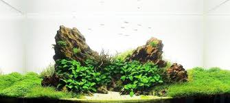 Aquascape Layout Dragon Stone Archives The Aquarium Plant Blog