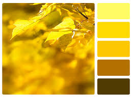 Yellow Swatches Yellow Monochromatic Color Scheme Home Design