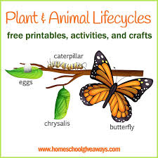 plant and animal lifecycles free printables crafts and activities