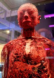 human circulatory system jpg 3456 5008 science images