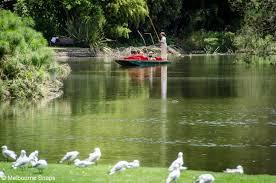 melbourne snaps punting royal botanic gardens melbourne