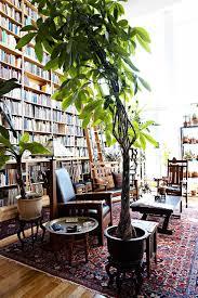 Low Light Indoor Trees Best 25 Indoor Trees Ideas On Pinterest Indoor Tree Plants