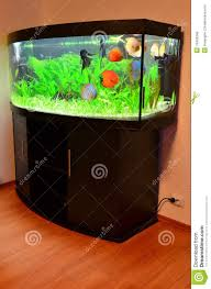 Design This Home Online Game by Fish Tank Free Fish Tank Game Online My Games Freefree Filterfree