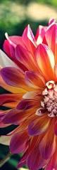Images Flowers Best 20 Beautiful Flowers Photos Ideas On Pinterest Flower