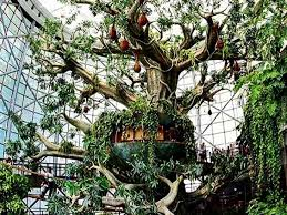 indoor rainforest in dubai opens with world s largest artificial