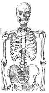 drawn sleleton skeleton body pencil and in color drawn sleleton