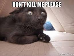 Kill Me Meme - don t kill me please schitzo cat make a meme