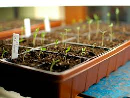 how to start a flower or vegetable garden from seeds sunset