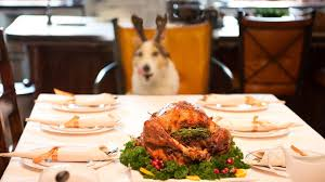 thanksgiving and pets how to keep your family members from