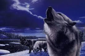 imagenes de fondo de pantalla lobos fondo escritorio paisaje lobos