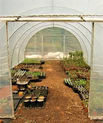 oregon native plant nursery about native foods nursery