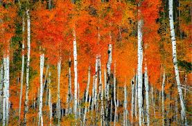 aspen forest 2016 high quality