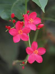 florist honolulu pretty pink flowers honolulu zoo oahu jess jer s pictures from