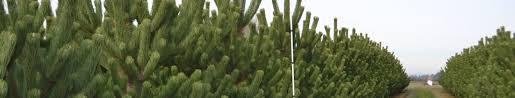 field stock premier trees