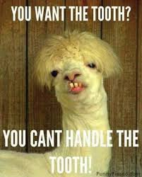 Dog Teeth Meme - you can t handle the tooth teeth memes and memes humor