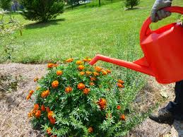 riverbanks botanical garden garden of aaron why aren u0027t the swiss known for watering cans