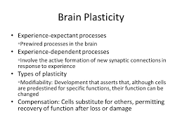 experience dependent brain growth physical development in infancy ppt video online download