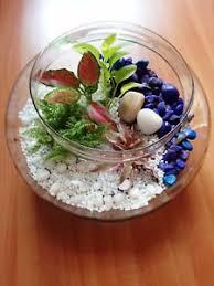 diy terrarium kit glass bowl plant container plants included ebay