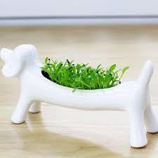 online cheap miser dog aerobic planting creative diy pot plant
