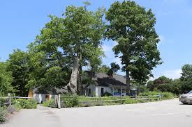 oak knoll wildlife sanctuary attleboro ma new england nomad