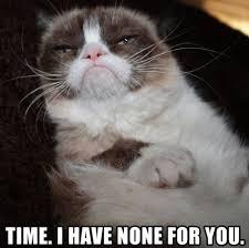 Unhappy Cat Meme - 2183 best grumpy cat images on pinterest grumpy cat baby