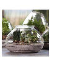 large glass terrarium ebay