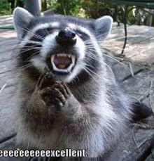 Raccoon Meme - funny raccoon meme funny pinterest funny raccoons raccoons