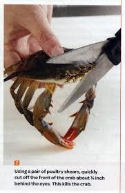 Sad Spider Meme - this kills the crab know your meme