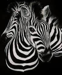 Black And White Zebra Bedrooms Accessories Modern Black And White 3d Animal Zebra Wallpaper