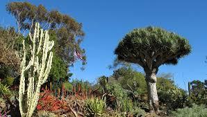 San Diego Botanical Garden Foundation San Diego Botanic Garden Day Trip A Paradise In Encinitas