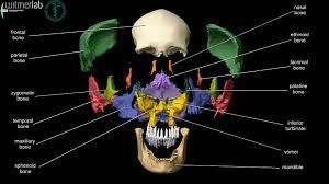 Anatomy Videos Free Download Ou Hcom 3d Interactive Human Anatomy