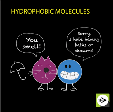 what is hydrophobic