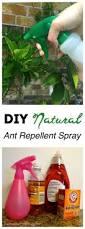 25 unique ant killer borax ideas on pinterest ant killer spray