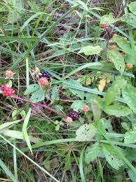 plants native to arkansas food matters conway arkansas