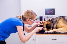 boxer dog kidney problems best dog food for dogs with seizures epilepsy