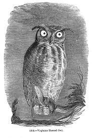vintage halloween clip art spooky owl the graphics fairy