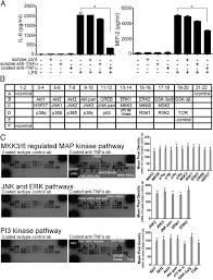 transmembrane tnf α reverse signaling inhibits lipopolysaccharide