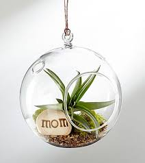hanging air plant happy mother s day hanging air plant