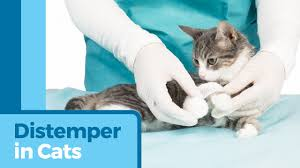 distemper in cats petmd