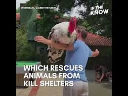 Thanksgiving Turkey Meme - thanksgiving turkey loves to hug the people who rescued him youtube