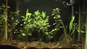 Zoo Med Lights by Tank Update 6 23 14 Zoo Med Ultra Sun To Ge 6500k Bulb Change