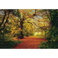 komar 106 in x 153 in autumn forest wall mural 8 068 the home autumn forest wall mural
