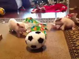 soccer wrapping paper christmas pigs wrapping paper soccer animated gif
