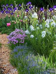 what should i plant together bearded iris perennials and peony