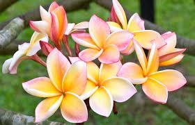 beautiful plants 5 most beautiful myanmar flowers sanctum inle resort