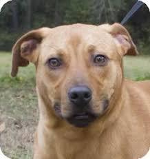 afghan hound adoption florida caesar adopted dog 17984476 gainesville fl catahoula