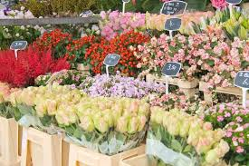 flowers for sale flowers for sale at a flower market the netherlands stock